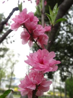 長居公園のお花たち