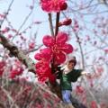 梅の花とフチ子さん