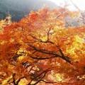 音羽三山と談山神社