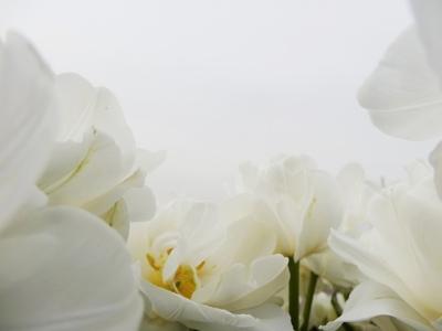 長居公園のお花たち (4)