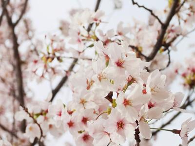 長居公園のお花たち (6)