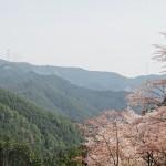 吉野奥千本と桜