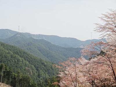 吉野 千本桜