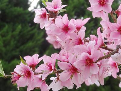長居公園のお花たち (3)