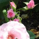 次はこんなん撮れました~花の文化園
