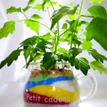 【写真】植物の植え替え
