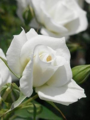 大阪谷町九丁目の整体院院長は花が好き